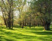 perizie su spazi forestali