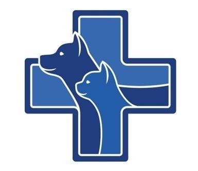 salute degli animali, animali domestici, veterinari