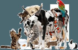 analisi cliniche per animali, assistenza domiciliare notturna, emergenza veterinaria