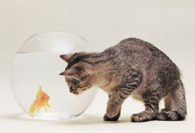 cat and a fish bowl