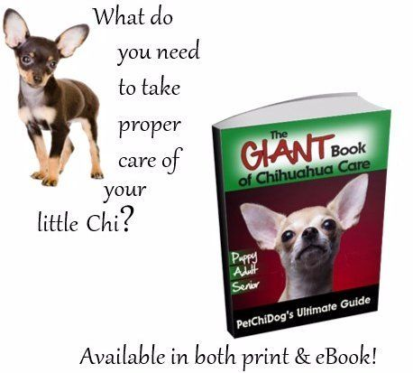 Chihuahua life span the chihuahua information center when a chihuahua matures into a senior twice per year checkups may be necessary fandeluxe Document