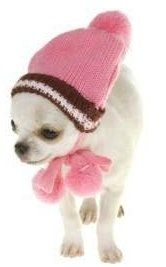 white female Chihuahua puppy with hat