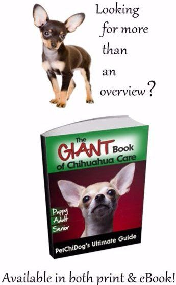 Senior chihuahua dogs what you need to know ways to help a senior chihuahua feel comfortable and happy fandeluxe PDF
