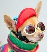 Chihuahua names perfect and cute names for your chi puppy chihuahua names girl and boy puppy names sciox Gallery