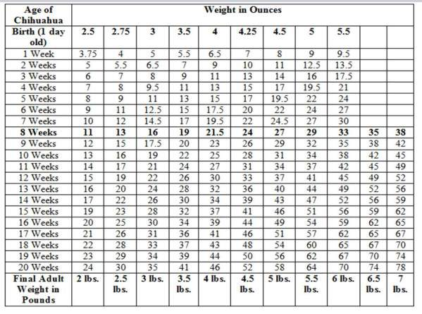 Chihuahua growth chart weight and size calculations