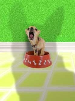 Chihuahua standing in food dish