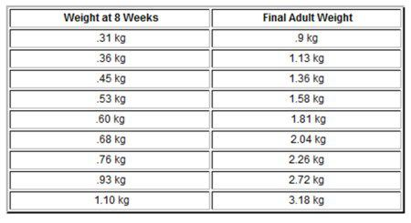 chihuahua weight chart