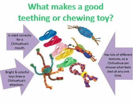 Collection of teething toys for Chihuahua a18a8d3c7