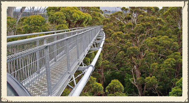 Tree Top Walk near Denmark Western Australia