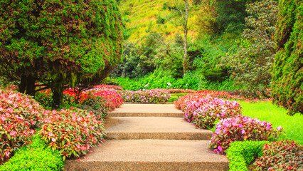 Flowers surrounding a walkway