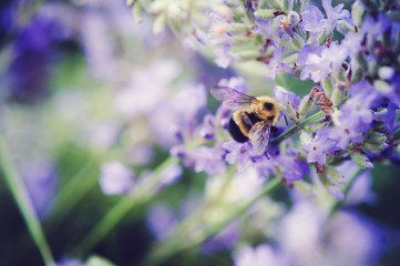 Keeping your backyard pollinator friendly