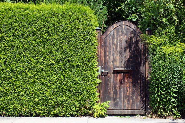Green plant fence