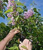 potatura-piante