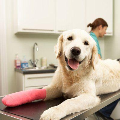Veterinary Surgeons