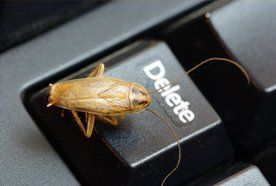 pest on the keyboard