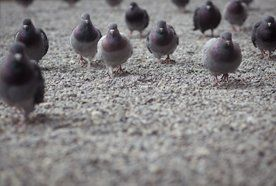 birds at a warehouse