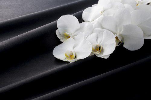 fiore bianca