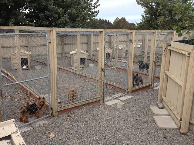 Kennels at Leithfield near Christchurch