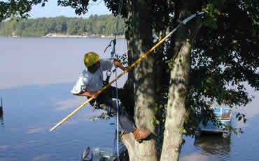 Tree Service High Point, NC
