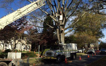 Tree Service Concord, NC