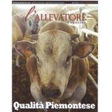 magazine plantamura