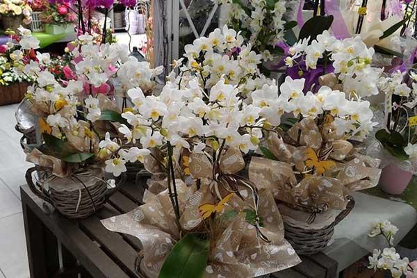 piante fiori giardinaggio a Padova