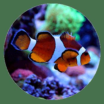 Aquariums & Supplies Retail - Hopkins, MN - Sea Level