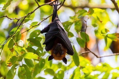 Wildlife Animal Control - a bat