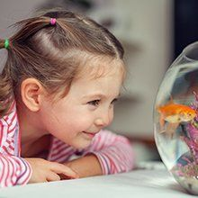 little girl admiring the fish in the bowl