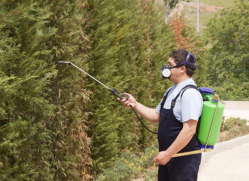 Exterminator spraying pesticide on bushes