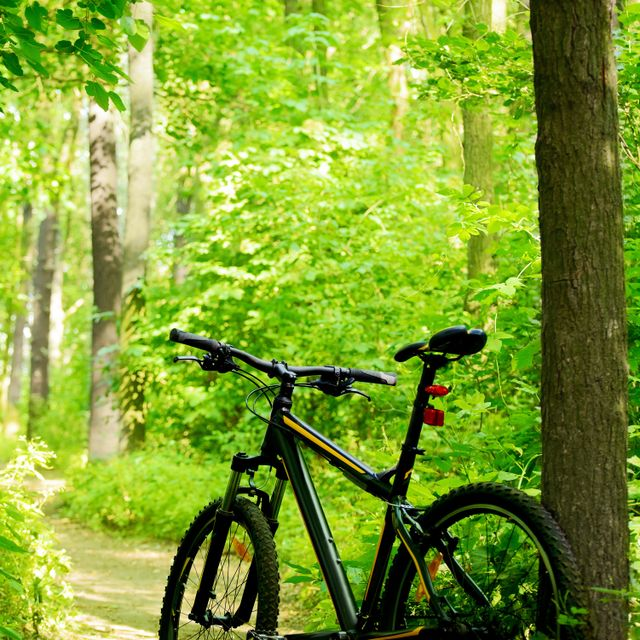 A mountain bike in the forest