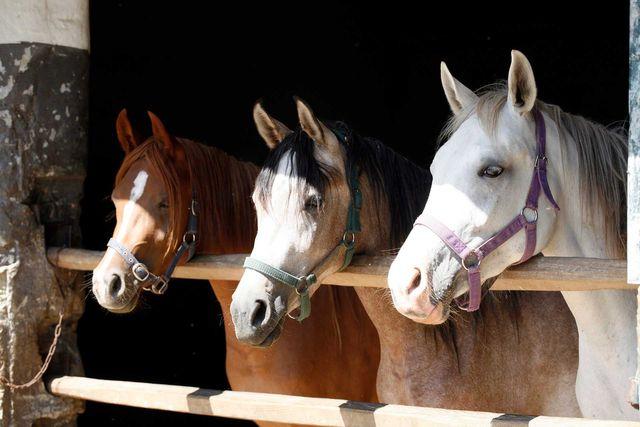 Horse Stall Mats Gabel Belting Inc