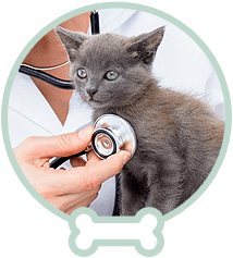 check up for a cat