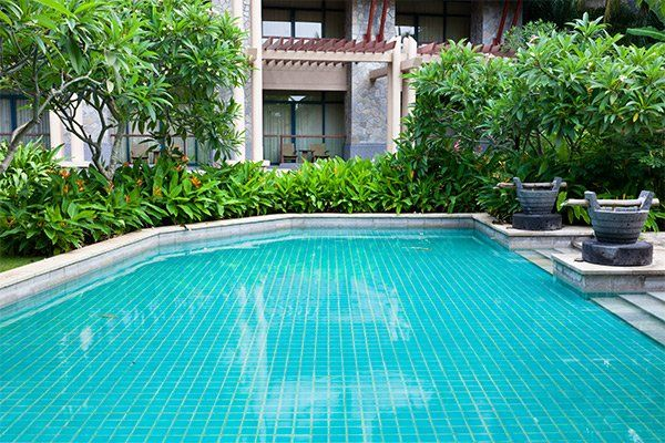 piscina circondata da piante verdi