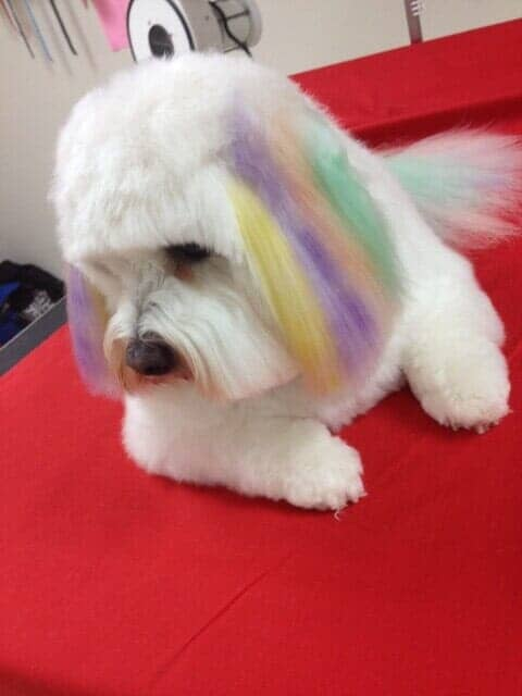 Professional Hair Styling Bloomington Il Top Dog Grooming Salon