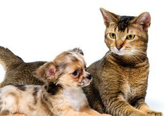cat and a puppy