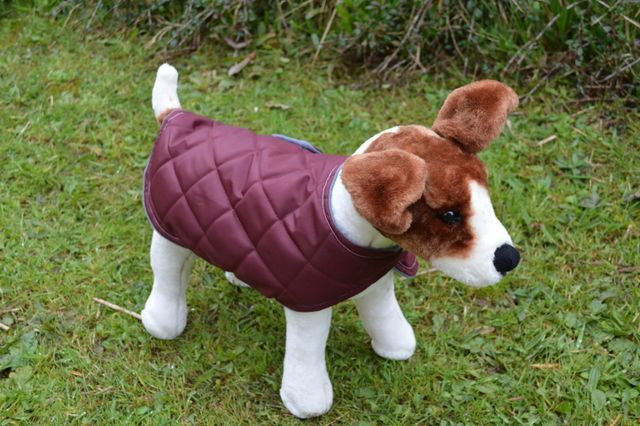 Music Dog Coat