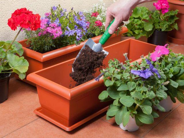 persona che trapianta dei fiori in un vaso
