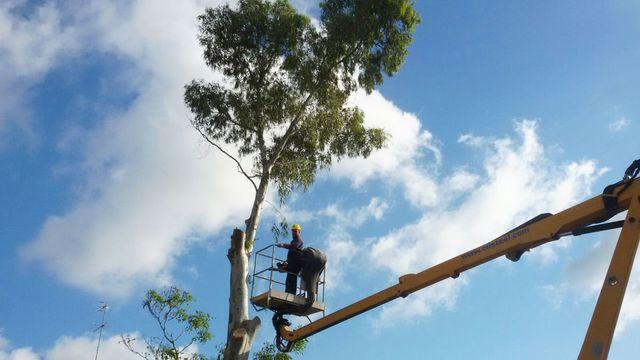 Potature e interventi arbusti a Impresa Giardini a Cannigione