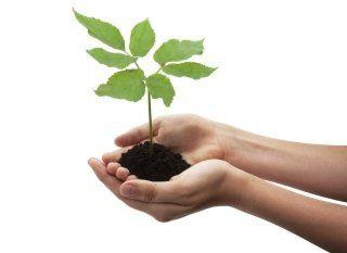 Mani giunti piene di terra e un piccolo albero crescendo