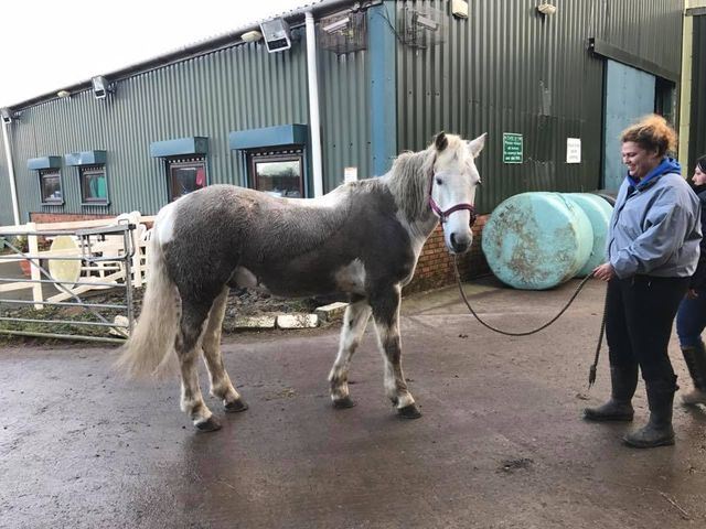 Meet the team at Busy Equitation Centre