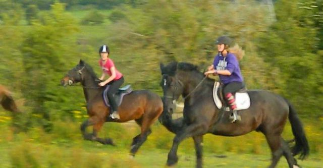 Private Horse riding lessons