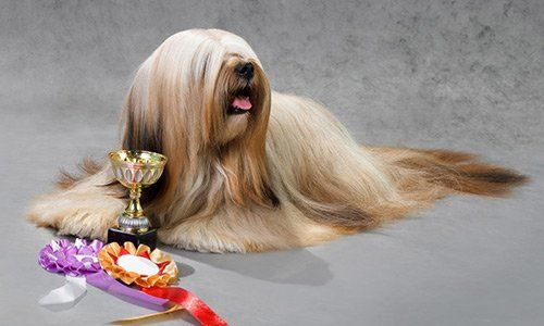 Cane con accessori per animali da Roberto Napoli, a Salerno
