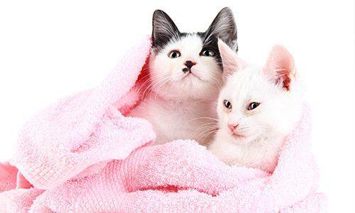 Toelettatura per gatti e animali domestici da Amici Di Zampa, nel salernitano