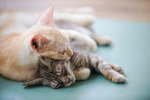 due gattini che dormono