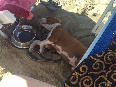 cane mentre dorme sulla spiaggia stabile