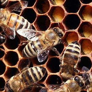 Macomb County Bee Removal | Maple Lane