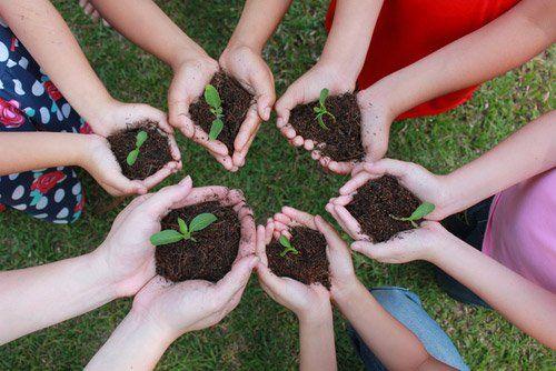 mani con terra e pianta