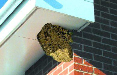 bird nest under soffit