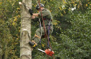 arboriculturist